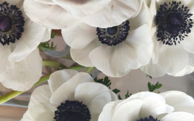 FLOWER THERAPY | ANEMONE