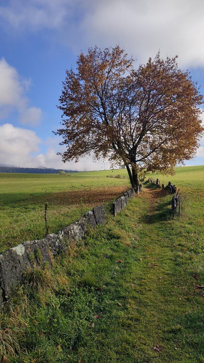 autumn-laurorafloreale.it