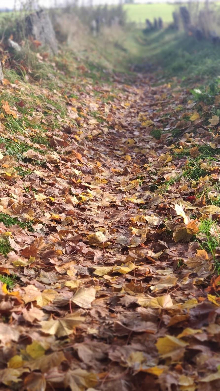 leaves-laurorafloreale.it
