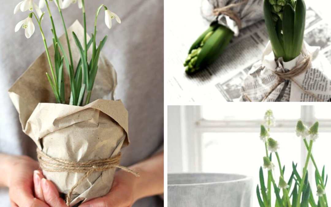 Flower-therapy-bulbs-laurorafloreale.it