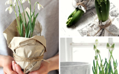 FLOWER THERAPY | BULBS